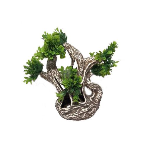 Bonsai dekoráció